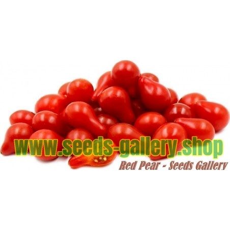 Semillas De Tomate Cherry Rojo Pera
