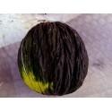Blauer Natternkopf Samen - Stolz von Madeira