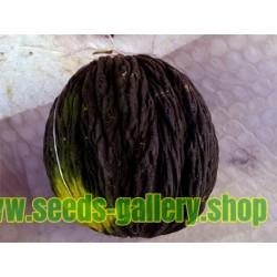 Schwarze Zuckermelone Samen