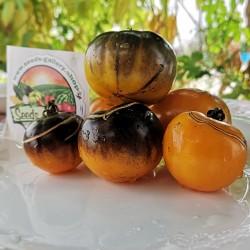 Семена томатов Blue Gold