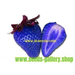African Blue - Blaue Erdbeeren Samen
