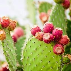 Semințe Wheel Cactus...
