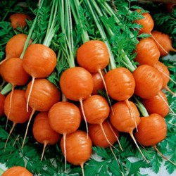 Carrot Seeds Parisian -...
