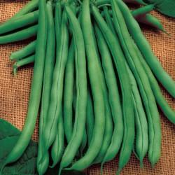 Nasiona fasoli Babylon