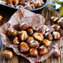 Chinese Chestnut Seeds...