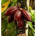 Σπόροι πιπεριά Numex Big Jim