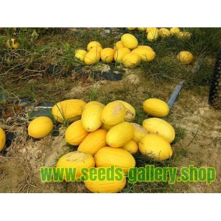 Semillas de Melón Amarillo Canario