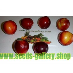 Cherry Plum Seeds (Prunus cerasifera)