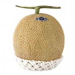 Nasiona Shizuoka Crown Melon