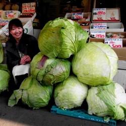 Japanska Gigantiska Kål Frön