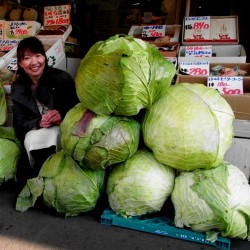 Japanese Giant Cabbage Seeds