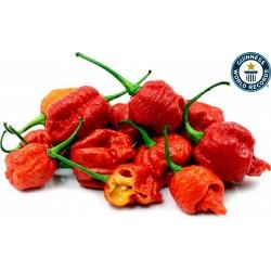 Sementes da Pimenta Carolina Reaper vermelho e amarelo 2.45 - 1