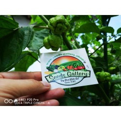 Carolina Reaper Seeds Red or Yellow Worlds Hottest 2.45 - 17