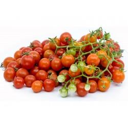 Yabani domates tohumları...