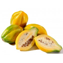 Nasiona Papaja górska...