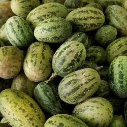Sementes de melão selvagem...