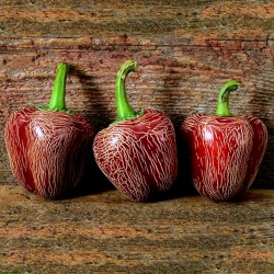 Dieghito Jalapeno Chili Seeds
