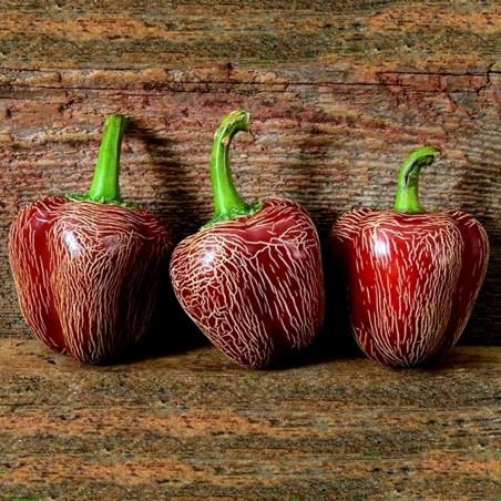 Dieghito Jalapeno Chili Pepper Zaden