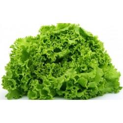 Semi di insalata invernale...
