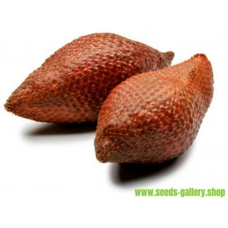 Exotic Snake Fruit Salak Seeds (Salacca edulis)