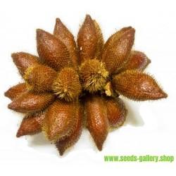 Σπόροι Snake Fruit (Salacca zalacca)