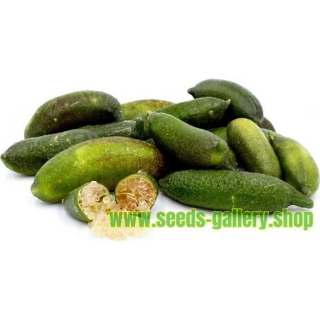 Finger Lime frön
