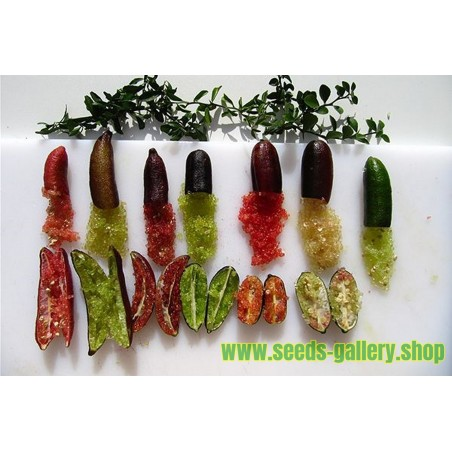 Finger Lime Seeds (Citrus australasica)