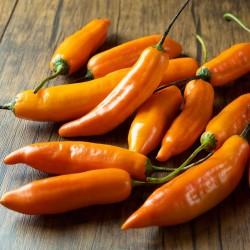 Chilipeppar frön Aji Amarillo