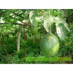 Σπόροι Gac Fruit (Momordica cochinchinensis)