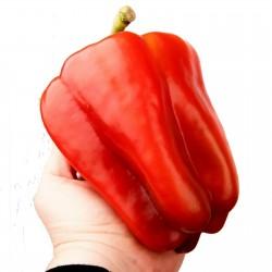Semi di peperone gigante...