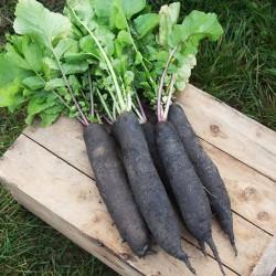 Black mountain beet seeds