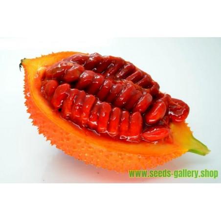Semi Di Gac Fruit (Momordica cochinchinensis)