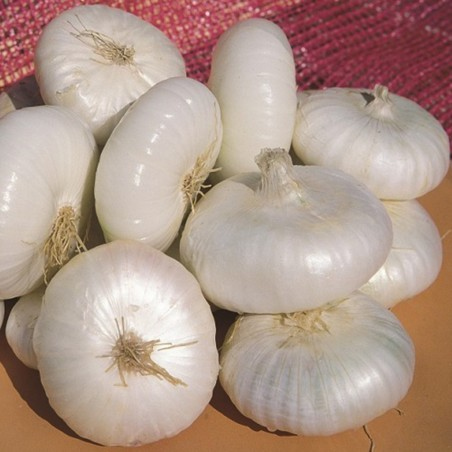 Semillas de cebolla Bianca di Maggio