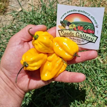 100 Семена перца желтого Habanero