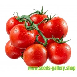 Semillas de Tomate Cereza Red Cherry