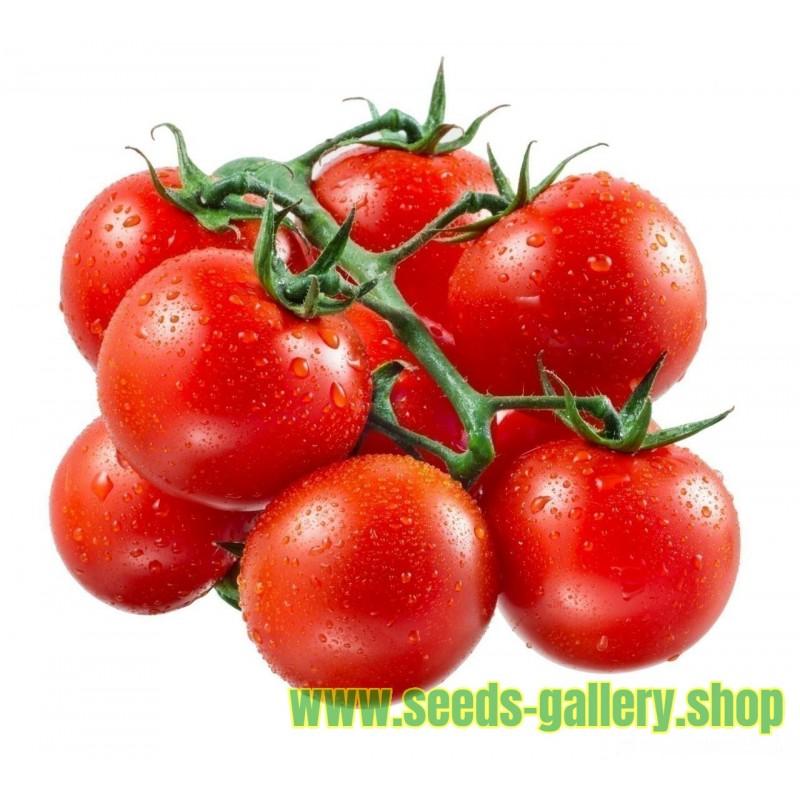 "Tomate ""Heinz 1350"" Samen Tomatensamen"