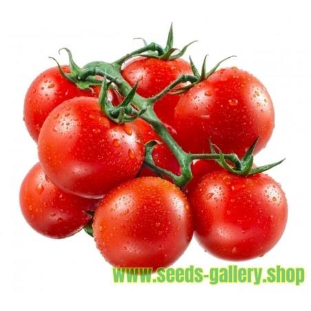 Tomatfrön Röd Cherry