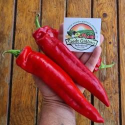 Sementes de pimenta doce...