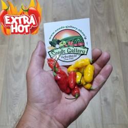 Semena chilli papričky...