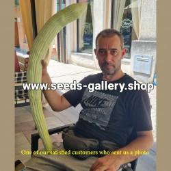 Semillas Pepino Armenio -...