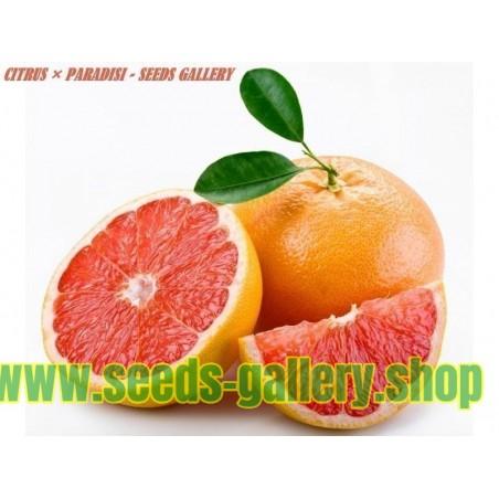 Grapefrukt Röd Frön