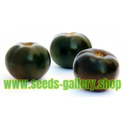 Tomatfrön Black Prince
