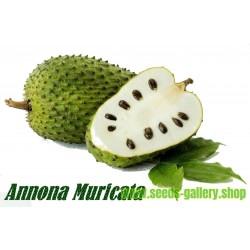 Graviola Seme – Biljka koja leci rak (Annona muricata)