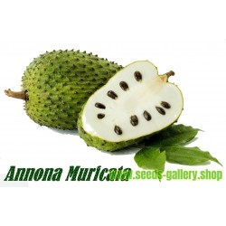 Semillas de Guanábana (Annona muricata)