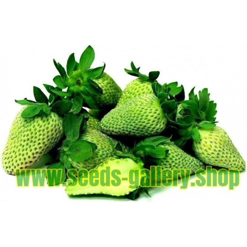 Zelena Jagoda Seme - Egzoticnih Plodova