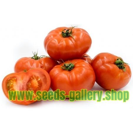 Tomatfrön Beefsteak