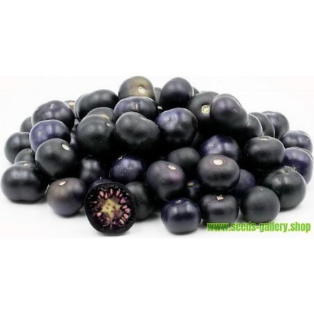 Jaltomata procumbens exotisk frukt