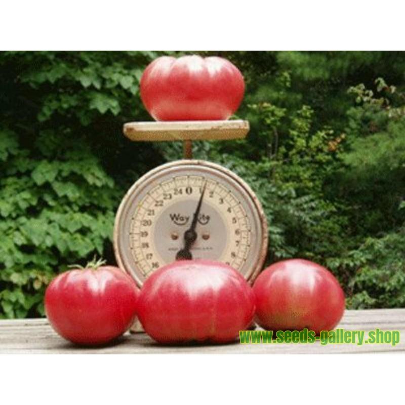 Semi di Pomodoro Red Cherry
