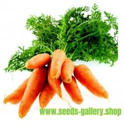 Carrot Nantes 500 seeds