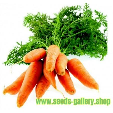 Carrot Seeds Nantes